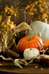Thanksgiving_themed_pumpkins_and_corn